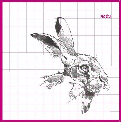 Hare Head Notebook